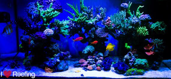 Fulltank_Reef